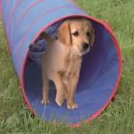 Spieltunnel für Hunde und Katzen